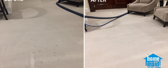 Removing tea stains from a carpet in Bloomsbury, London WC1H